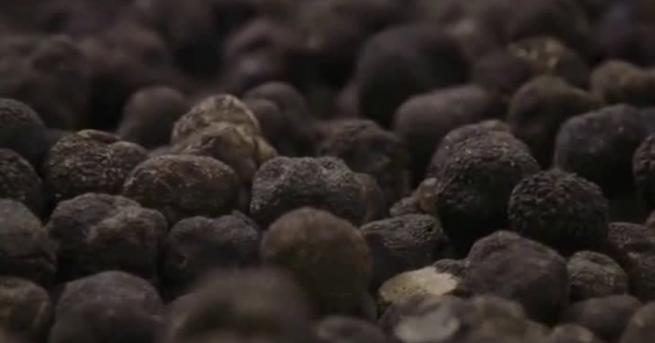Снимка: Откриха нов вид трюфели в България