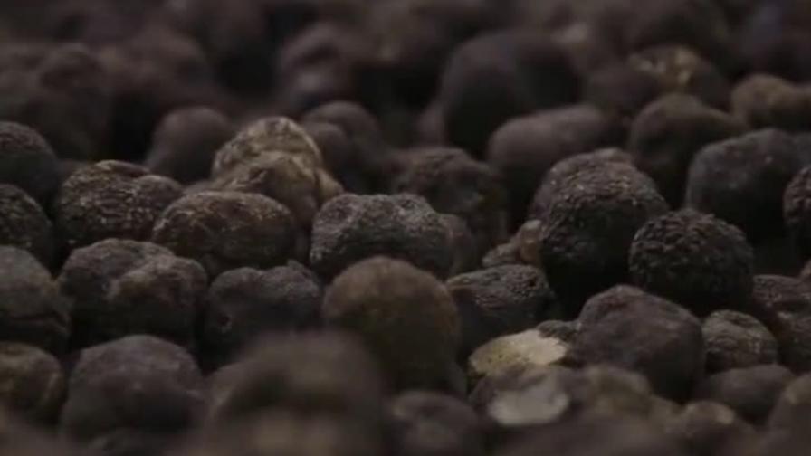 <p>Откриха нов вид трюфели в България</p>