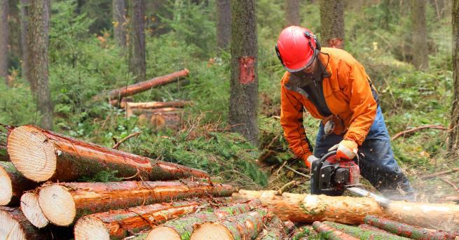 Снимка: Съмнителен дърводобив в Севлиево, груби нарушения