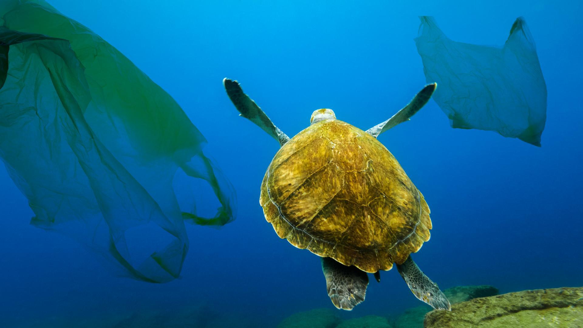 Моретата през 2050: Повече пластмаса, отколкото риба