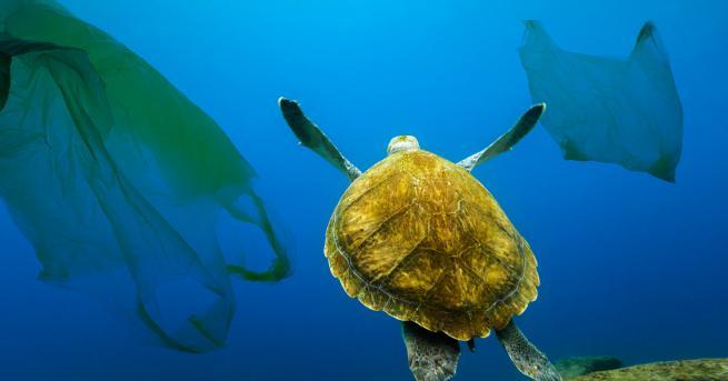 Снимка: Моретата през 2050: Повече пластмаса, отколкото риба