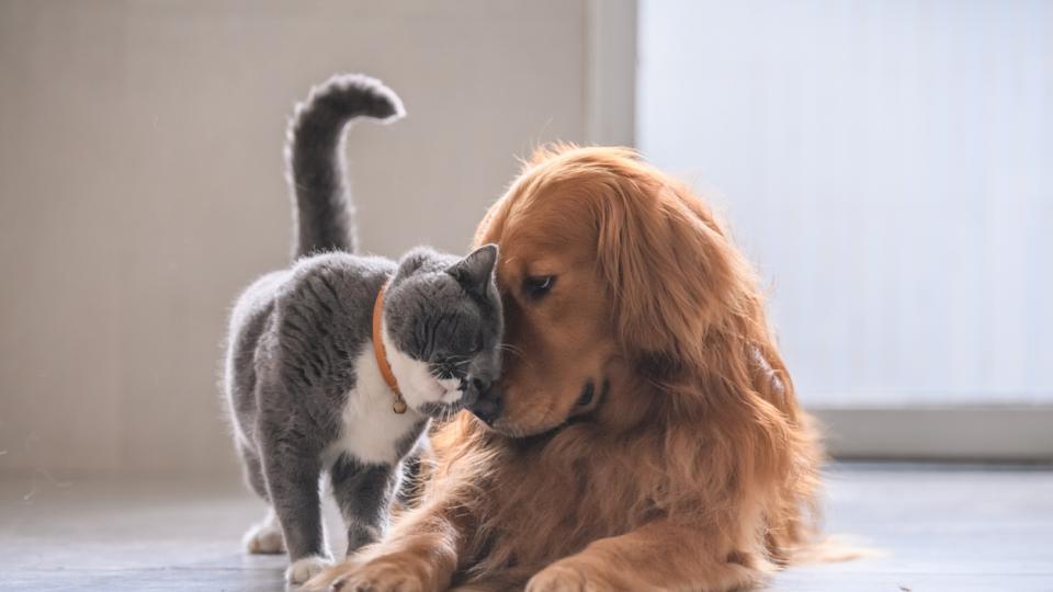 домашен любимец сладко животинче куче котка заек