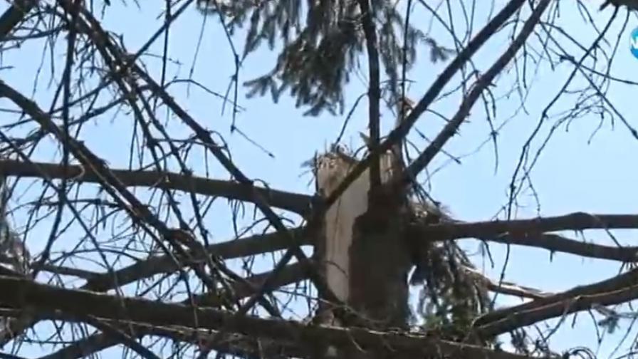 Какви са щетите след бурята, торнадо удря тази част на страната