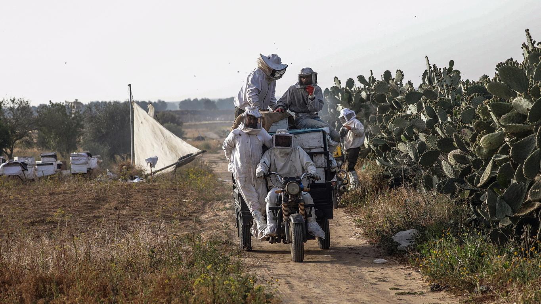 Палестински пчелари проверяват кошерите с пчелички в източната част на град Хан Юнис, близо до границата с Израел, южната ивица Газа. Пчеларите събират мед и восък от кошерите по това време на годината.