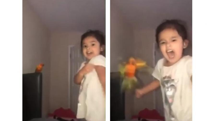 Малко момиче тренира птицата си да атакува когото й каже