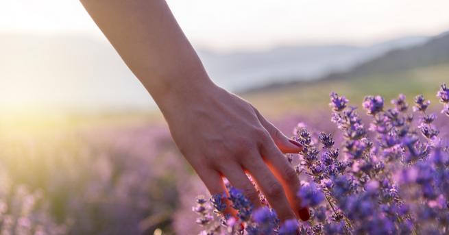 Любопитно Как лавандулата може да ни помогне, ако изпитваме тревожност