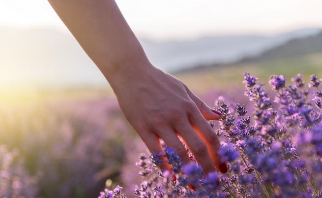 Как лавандулата може да ни помогне, ако изпитваме тревожност