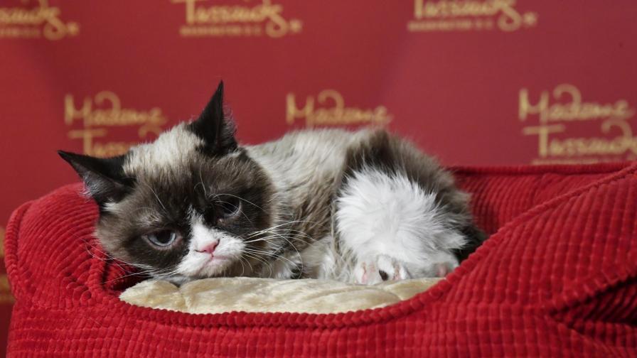 <p><strong>Почина</strong> едно от най-известните котета в света - Grumpy Cat</p>