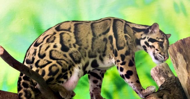Любопитно Бракониери с гордост споделят снимки на убит застрашен вид