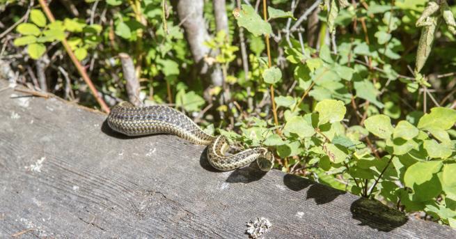 България Какво да правим, ако срещнем змия От началото на