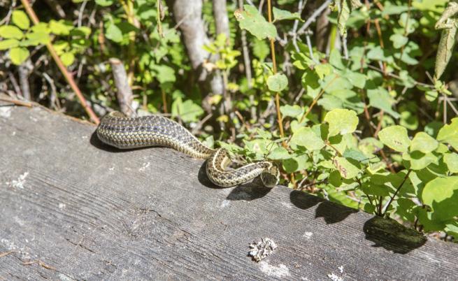 Какво да правим, ако срещнем змия