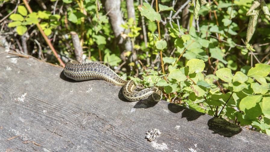 <p>Какво да правим, ако срещнем змия</p>