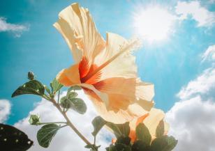 На петък 13-ти ще е слънчево