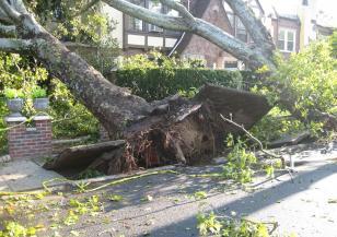 Дърво в Пловдив падна след снежна буря