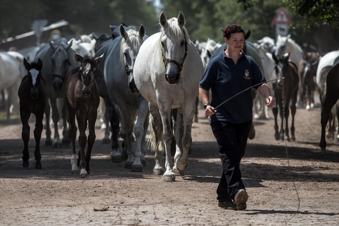<p>Фермата за развъждане и обучение на коне за церемониални карета в Кладруби над Лабем е включена в списъка на световното наследство от ЮНЕСКО на 6 юли 2019 г. по време на 43-та сесия на Комитета за световно наследство в Баку, Азербайджан.</p>