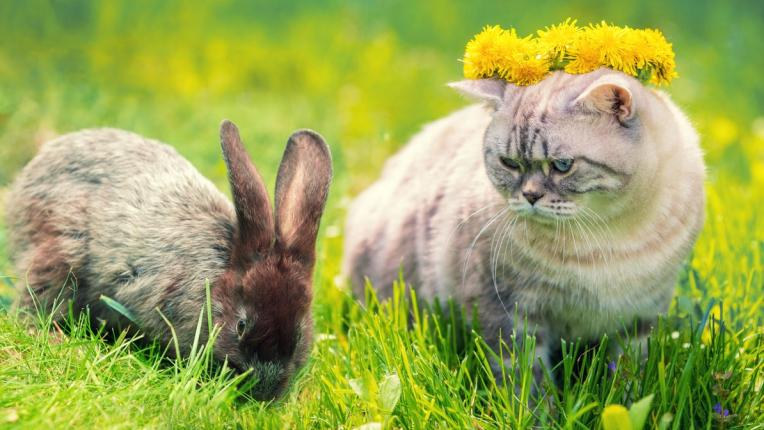 котка заек