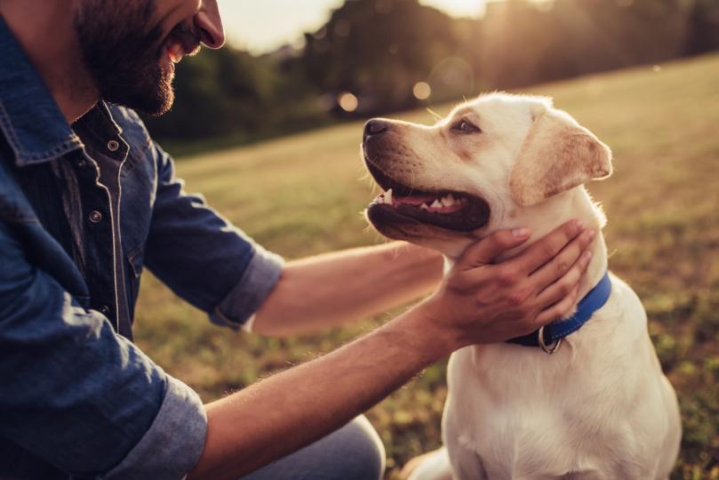 <p>Е, в крайна сметка какво си мислят кучетата, когато им се усмихваме? Ако комбинираме всичко&nbsp;казано дотук, те&nbsp; са родени с умението да&nbsp;възприемат&nbsp;усмивката като израз на щастие, но с времето се учат да я свръзват с палитра от позитивни емоции.&nbsp;</p>