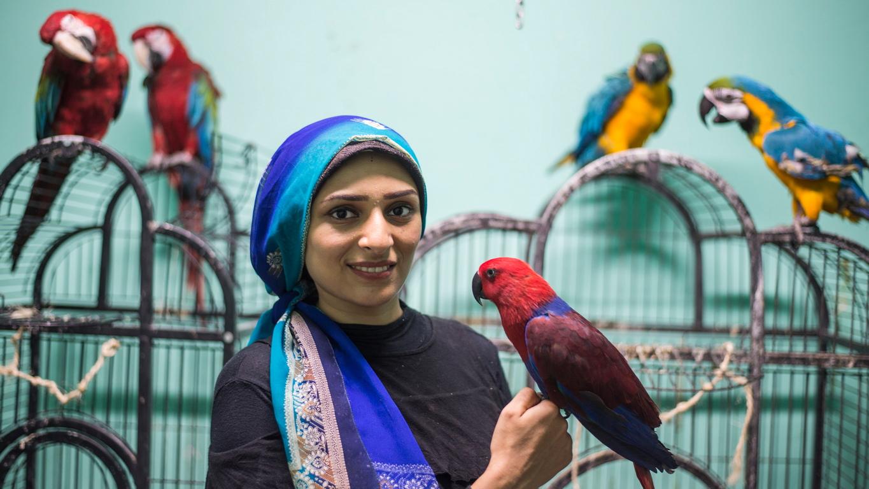 <p>Академията действа и като хотел за пътуващи собственици на птици и има магазин с различни видове играчки за папагали.</p>