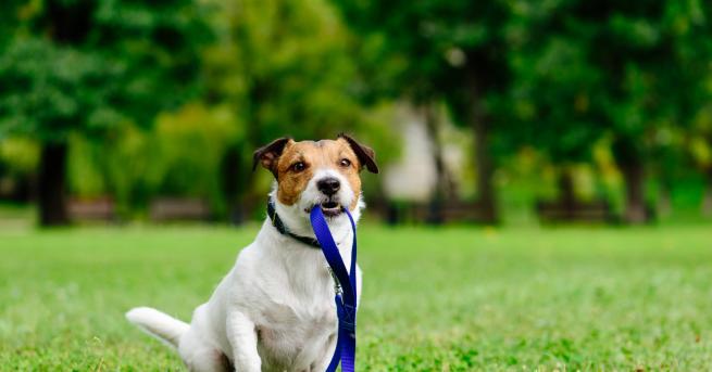 Снимка: Изгубено куче - какво да правим?