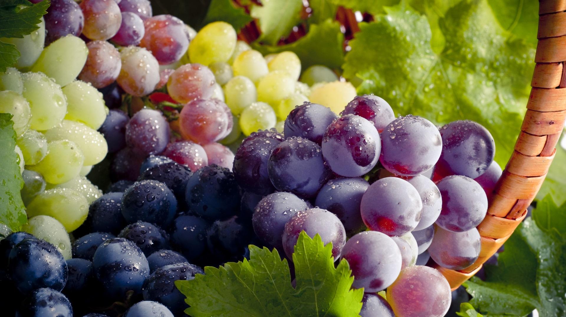 <p><strong>Телец &ndash; грозде</strong></p>  <p>Гроздето е най-надеждният плод. То е отлично за похапване в движение и за късна спокойна закуска. Такива са и представителите на зодия Телец надеждни и спокойни.</p>