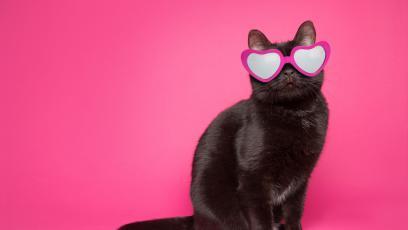 10 любопитни факта за котките