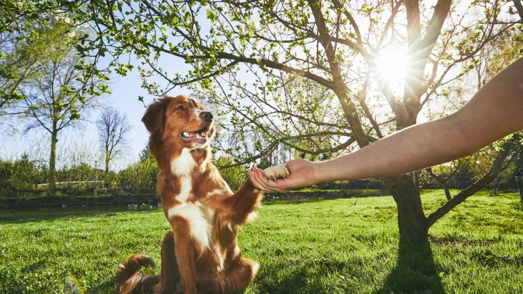Формата на муцуната подсказва колко дълго ще живее кучето (и още 9 малко известни факта)