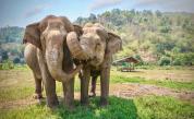 Първи крачки към пълната забрана на продажбата на диви слонове