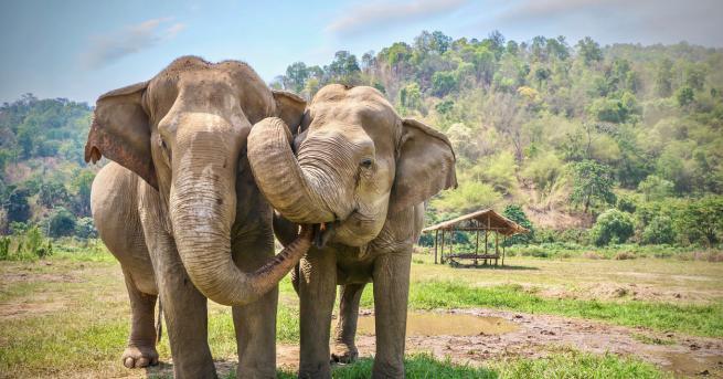 Снимка: Първи крачки към пълната забрана на продажбата на диви слонове