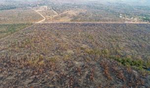 Пожари опустошават Амазонка - превърнаха деня в нощ