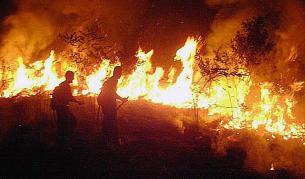 Самолет с курсанти се разби в Украйна, много загинали