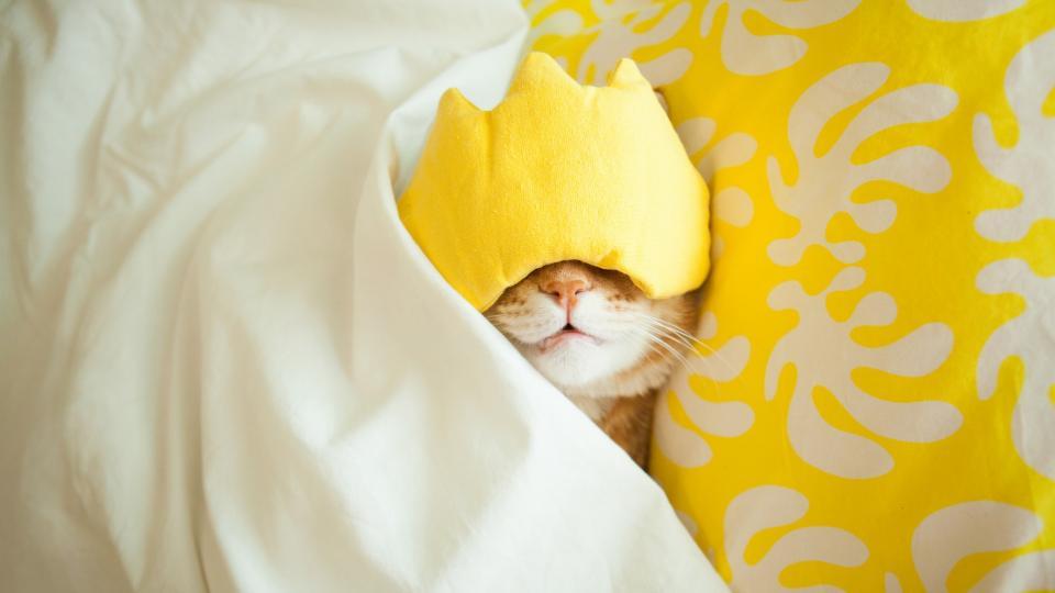 котка сън