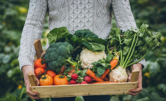Райската градина може и да е зеленчукова. При това в града