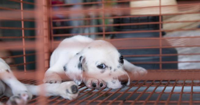 Свят Бруталните развъдници за кучета на България, Румъния и Унгария