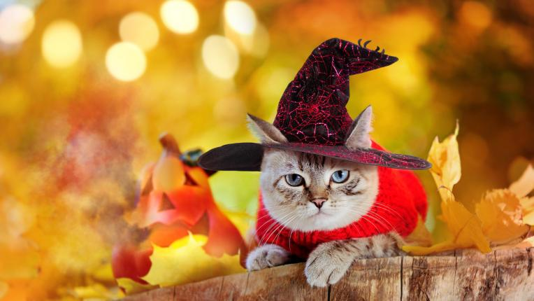 15 оригинални и забавни костюма за Хелоуин за домашния любимец
