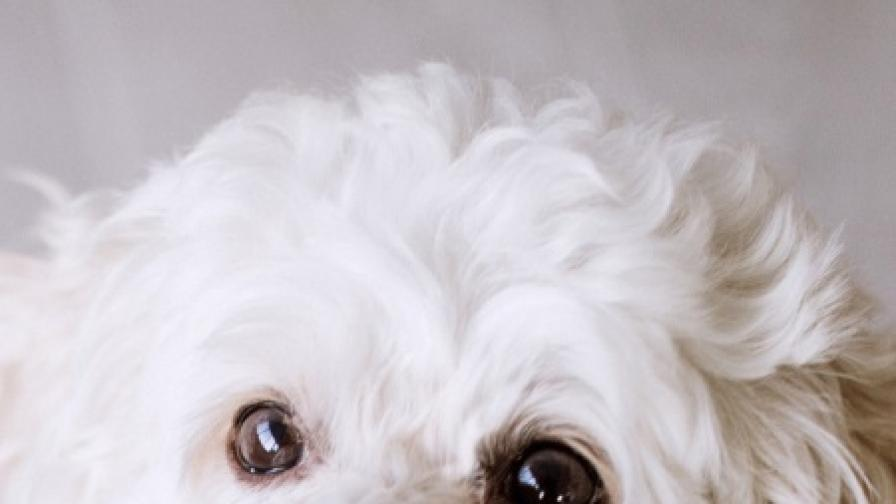 """""""Кучешки"""" хороскоп - какво означава зодията..."""