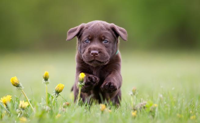 Куче на 18 хил. години поставя много въпроси пред учените