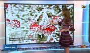 Прогноза за времето (07.12.2019 - обедна емисия)
