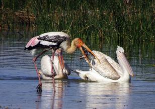 Климатичните промени все повече застрашават флората и фауната
