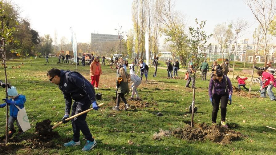 Добра новина – спасиха 10 500 дървета от изсичане