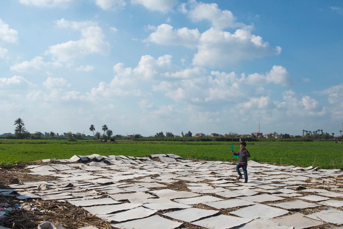 <p>Някои семейства произвеждат около 1000 листа ежедневно, продавани в магазини за подаръци и базари в Египет.</p>