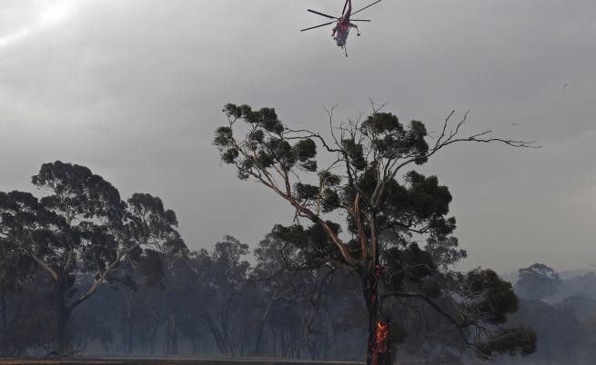 Пожарите в Австралия: твърде късно за евакуация
