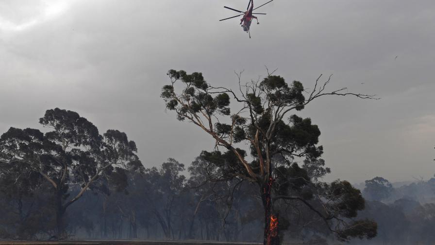 <p>Пожарите в Австралия: твърде късно за евакуация</p>