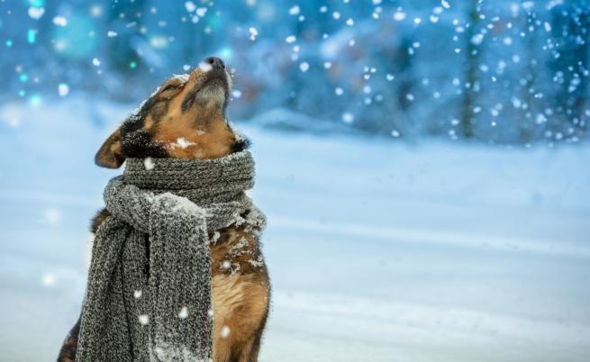 Очаква ни рязка промяна на времето и сняг