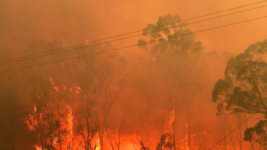 Екологичен фундаментализъм зад огнения ад в Австралия