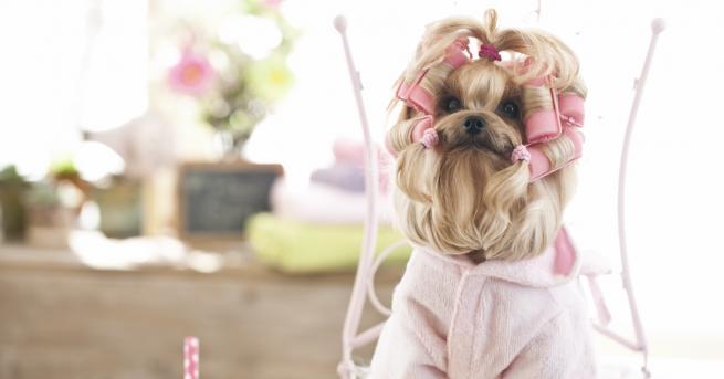 Любопитно Супер сладки тенденции за кучета Ето някои от най-популярните