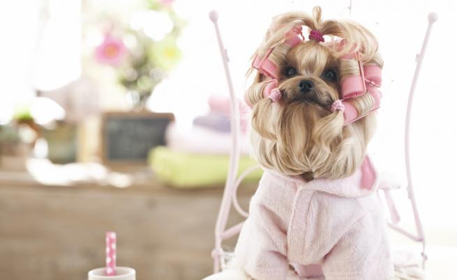 Супер сладки тенденции за кучета