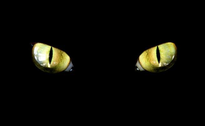 Определяната като най-лошата котка в света си търси дом
