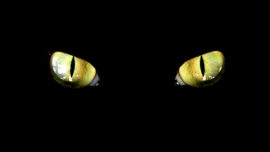 <p>Котката, която може<strong> &quot;да се взира в душата ви, докато...&quot;</strong></p>