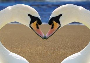 Кои двойки животни остават заедно завинаги