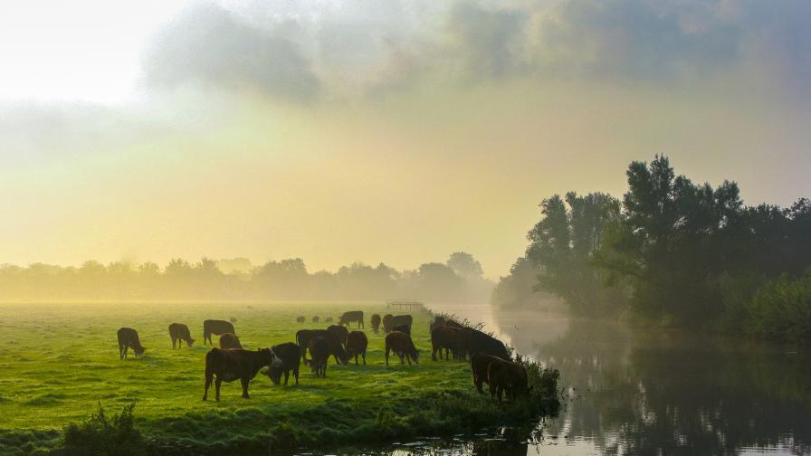 ДПА: Животни и растения изчезват по-бързо от всякога